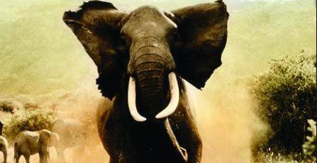 gajah ngamuk injak warga lampung barat